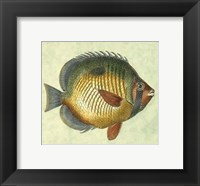 Framed Small Butterfly Fish I