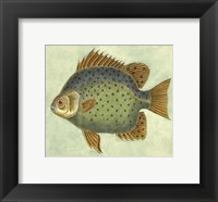 Framed Small Butterfly Fish II
