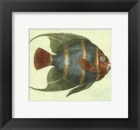 Framed Small Angel Fish I