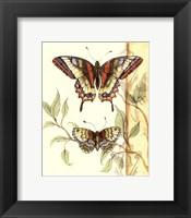 Framed Mini Tandem Butterflies II