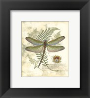 Framed Mini Regal Dragonfly I