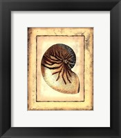 Small Rustic Shell IV Framed Print