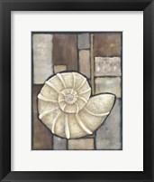 Framed Abalone I