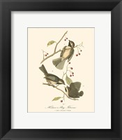 Hudson's Bay Titmouse Framed Print