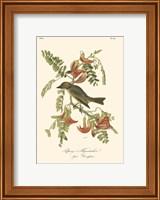 Framed Pipiry Flycatcher