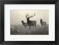 Framed American Elk