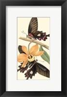 Framed Butterflies and Flora II