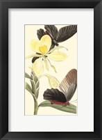 Framed Butterflies and Flora IV