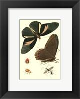Papillion III Framed Print