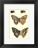 Papillion IV Framed Print