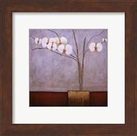 Framed Orchidee I