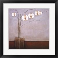 Framed Orchidee II