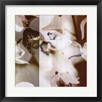 Framed Cymbidium Orchid II