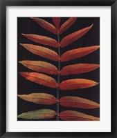 Framed Staghorn Sumac II
