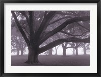 Oak Grove in Fog (black & white) Framed Print