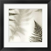 Framed Ferns No. 2
