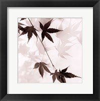 Japanese Maple Leaves No. 1 Framed Print