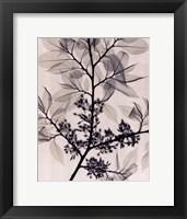 American Elm Framed Print