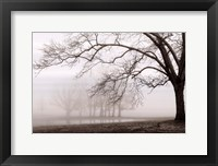 Framed Layers Of Trees I