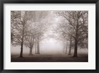 Layers Of Trees II Framed Print