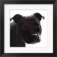 Framed Staffordshire Bull