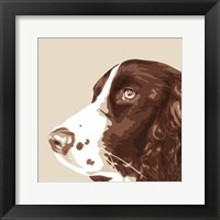 Framed Springer Spaniel