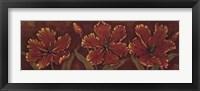 Venetian Tulips - Cs Framed Print