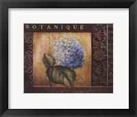 Framed Botanique I