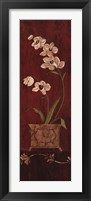 Framed Orchid Allure II