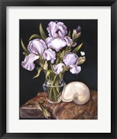 Framed Purple Iris with Shell