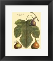 Framed Fig Leaf II