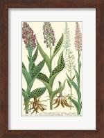 Framed Lilac Blooms I