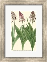 Framed Lilac Blooms II