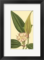 Framed Tropical Ambrosia I