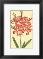 Framed Le Fleur Rouge I