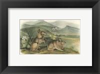 Framed Nuttall's Hare