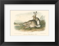 Framed Rocky Mountain Hare