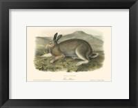 Framed Polar Hare