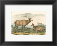Framed American Elk and Deer
