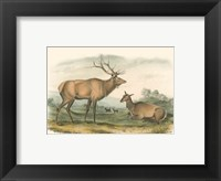 Framed American Elk and Deer