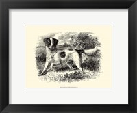 Framed English Setter