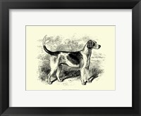 Framed Foxhound