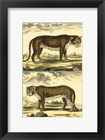 Framed Panther and Leopard