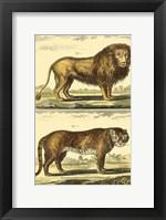 Framed Lion and Tiger