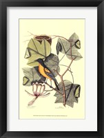 Framed Baltimore Bird and Tulip Tree