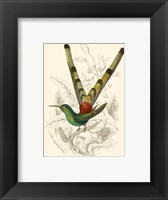 Framed Hummingbird II