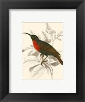 Framed Hummingbird III