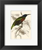 Framed Hummingbird IV