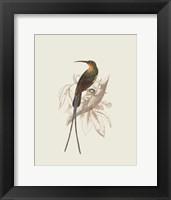 Framed Hummingbird V
