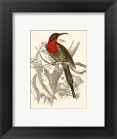 Framed Hummingbird VI
